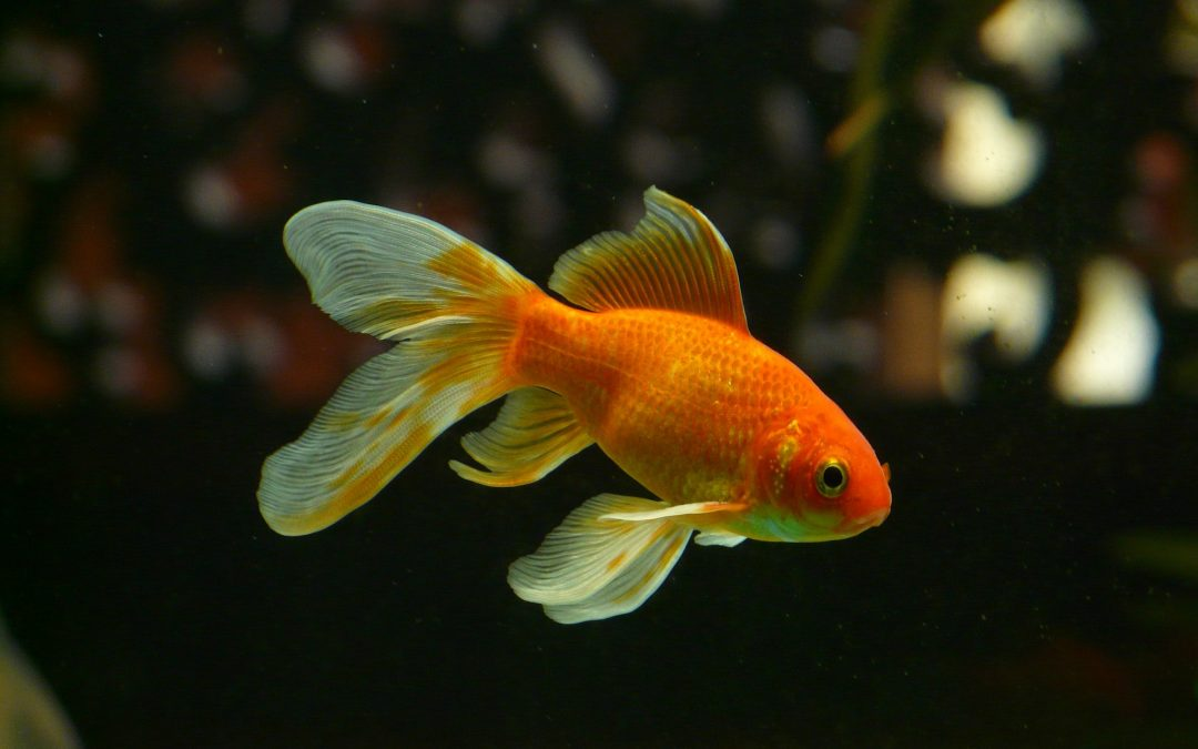 Fish Make The Greatest Pets